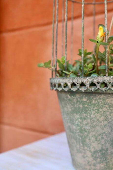 vaso con cloche in ferro